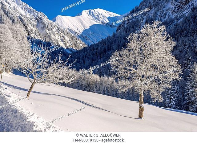 Maple, Alps, Mountains, Snow, Germany, Europe, Bavaria