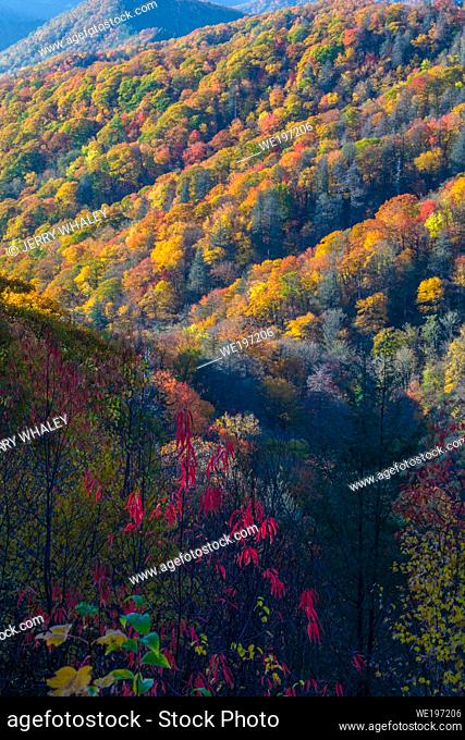 Autumn Color in the Great Smoky Mountains National Park