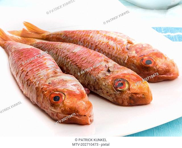 Fresh red mullet fish on tray