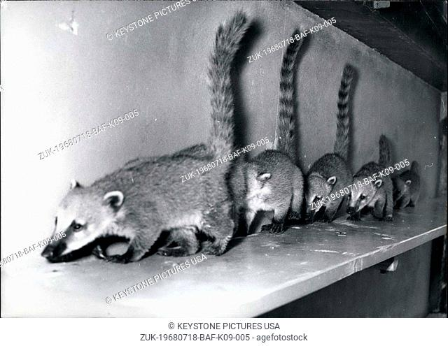 Jul. 18, 1968 - Pictured here are coati babies from Hellabrunn Zoo. They were born in May of 1968. (Credit Image: © Keystone Press Agency/Keystone USA via...