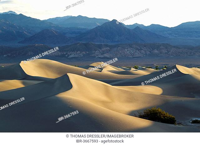 Mesquite Flat Sand Dunes and Amargosa Range in the early morning, Death Valley National Park, Mojave Desert, California, United States