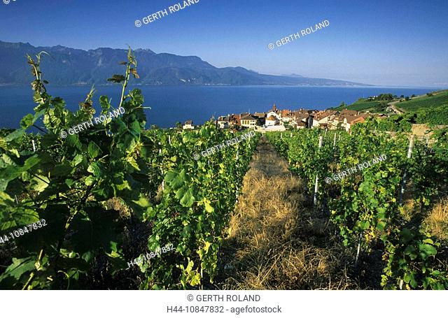Switzerland, Europe, Rivaz village, canton Vaud, Lake Geneva, water, Lavaux region, wine village, vineyards, vineyard