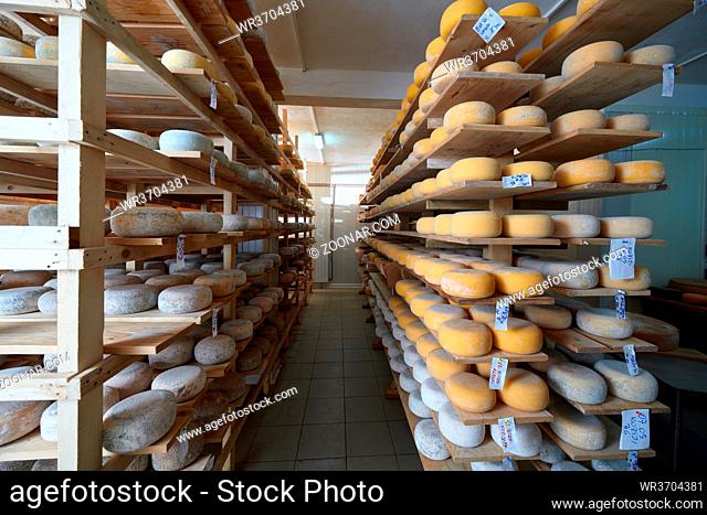 Cheese factory production shelves with aging old cheese local organic empty