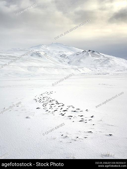 Snowy mountain and valley in cloudy evening
