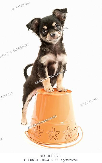 A puppy on a bucket