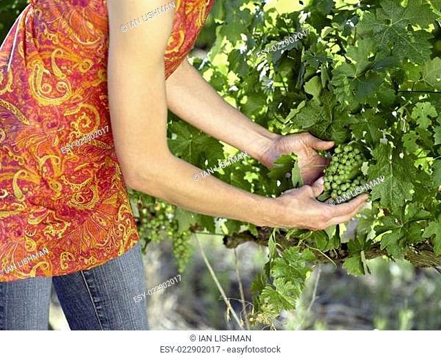 A woman at a vineyard