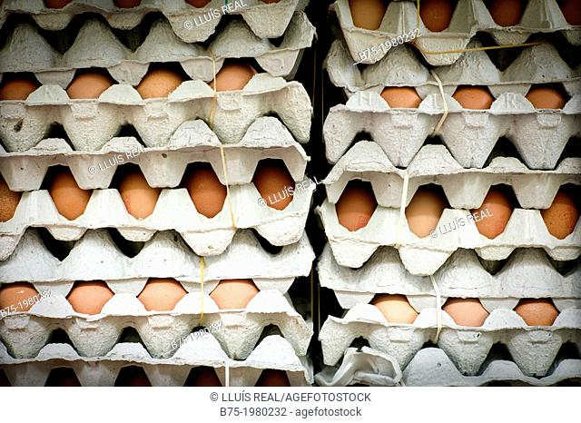 Many eggs in egg cartons stacked