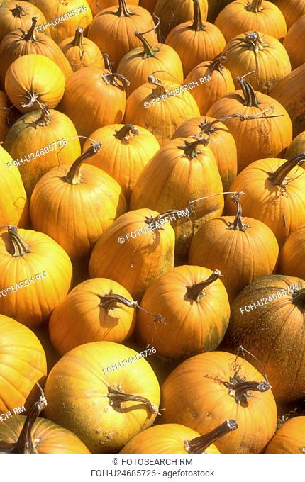 pumpkins, harvest, close-up, autumn, display, A close up of cluster of pumpkins for sale at a market in the state of Vermont
