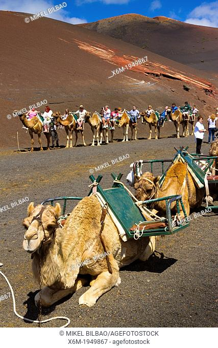 Camel ride. Timanfaya National Park. Lanzarote, Canary Islands, Atlantic Ocean, Spain