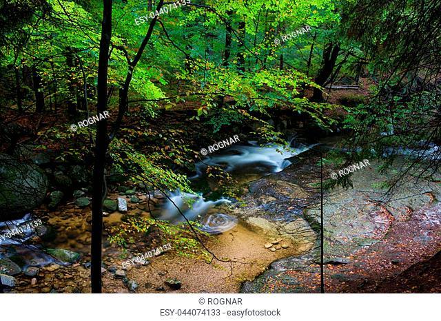Forest creek in Karkonosze National Park, Poland, Europe