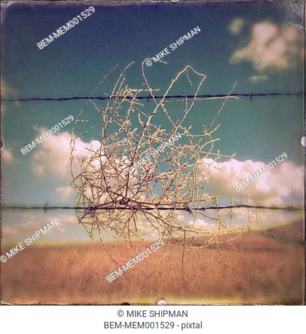 Tumbleweed caught in barbed wire fence in rural landscape