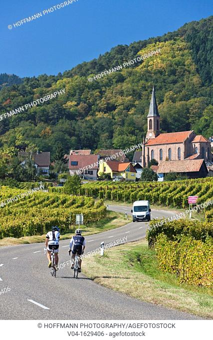 Cyclists on the road towards Husseren-les-Châteaux, Alsace, France, Europe