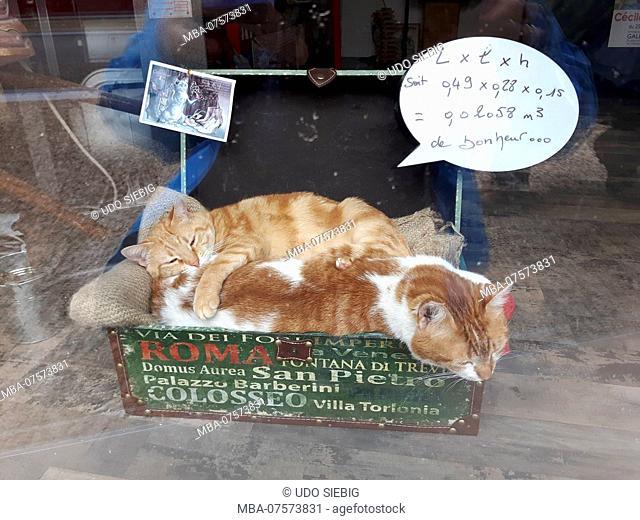 France, Brittany, Finistère Department, Rosporden, shop window, domestic cats, speech bubble