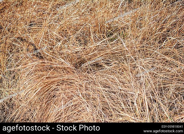 Hay or dry grass texture. Fall nature background