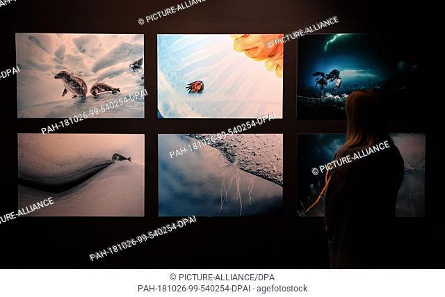 """26 October 2018, Bremen: An employee of the Ìberseemuseum, in the exhibition """"""""Antarctica"""""""", looks at underwater photos of Laurent Ballesta taken during an..."""