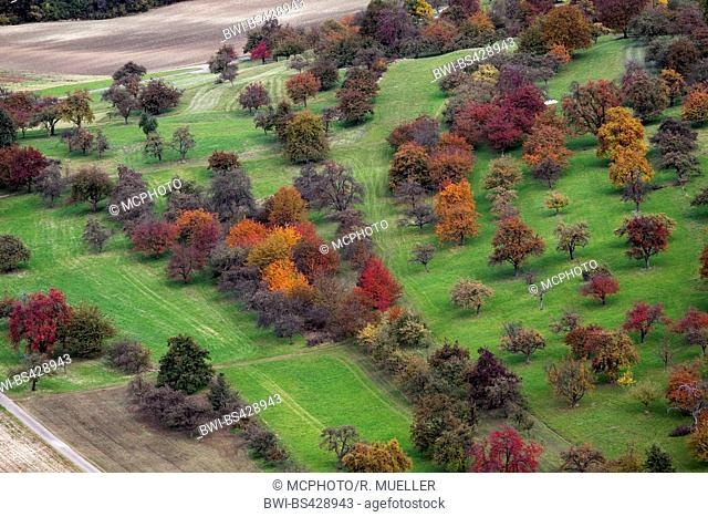 fruit tree meadows at the Neidlinger Tal in autumn, Germany, Baden-Wuerttemberg, Swabian Alb