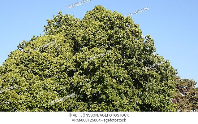 Wind in a tree