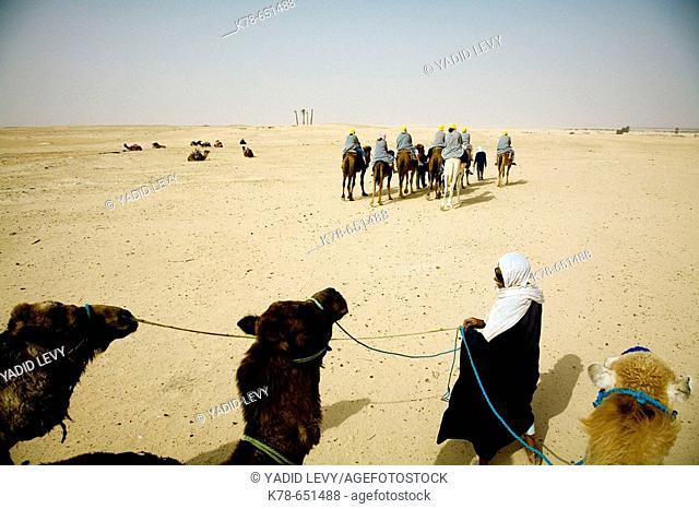 Beduins leading tourists on camels at the sahara desert. Douz, Tunisia
