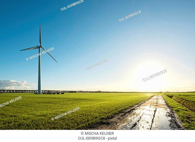 Windturbine in field, Zeewolde, Flevoland, Netherlands, Europe
