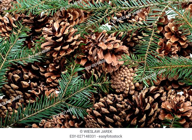 Background of dried natural pine cones. Conceptual of the Christmas season