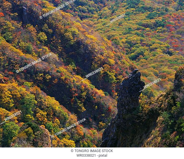 Jeju Island/ Colored leaves in Hanla Mountain
