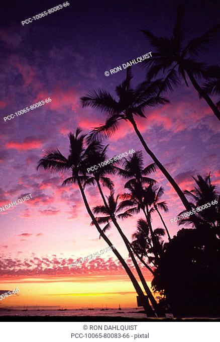 Palm trees along coastline silhouetted by a colorful sunset sky