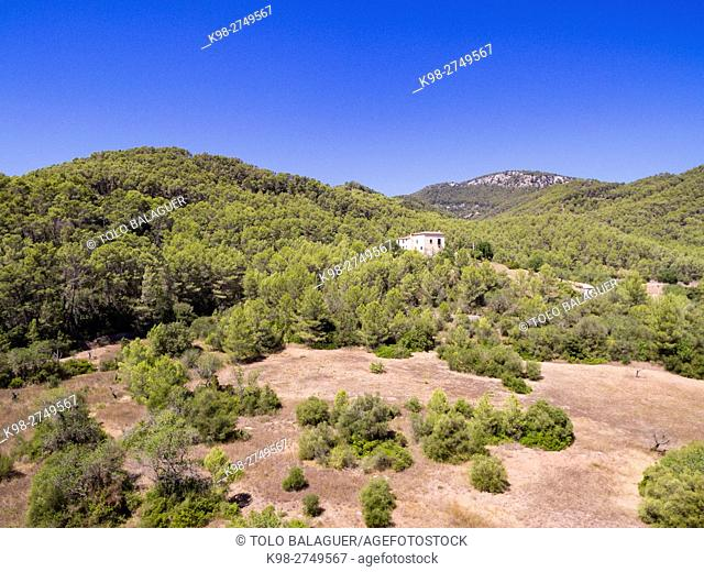 pinar de Canet, Esporles, sierra de Tramuntana, Majorca, Balearic Islands, Spain