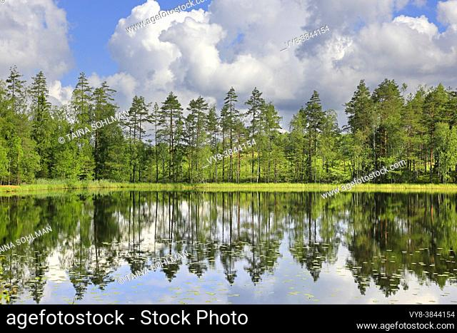 Pine trees reflected on the calm surface of Lake Sorvasto on beautiful Midsummer Eve morning, with blue sky and fairweather clouds