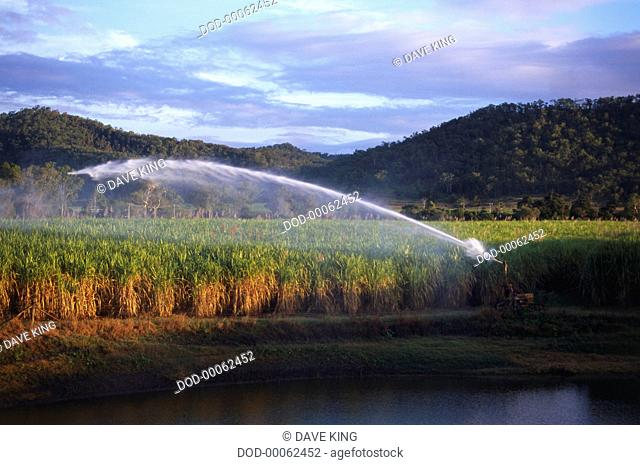 Irrigating sugar cane fields, with a huge jet of water visible, in Mackaya, near Eungella National Park. Tree-covered hills are in the background and the sky is...