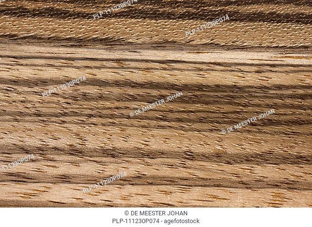 Wood grain of Zebrawood / zebrano / zingana Microberlinia bisculata / Microberlinia brazzavillensis