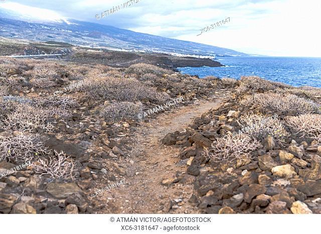 coastline or seashore of El Porís de Abona. Tenerife, Canary Islands, Spain