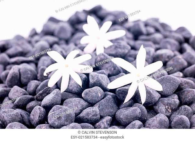 Three jasmine flowers on zen stones