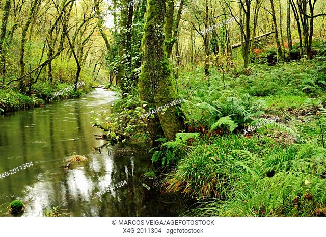 River Barragan, forest and water mill