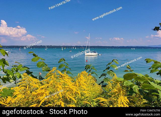 District Starnberg, Germany August 1st, 2020: Impressions Starnberger See - 2020 Tutzing, Starnberger See, Fuenfseenland, Bavaria, Oberbayern