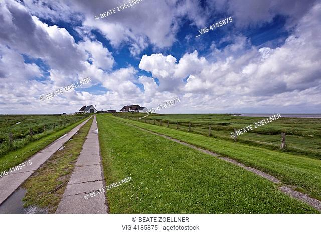 The road to Hamburg Holm - Hamburger Hallig, Schleswig-Holstein, Germany, 23/06/2013