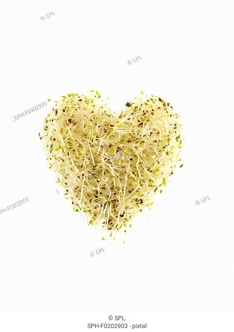 Sprouting alfalfa, heart shaped
