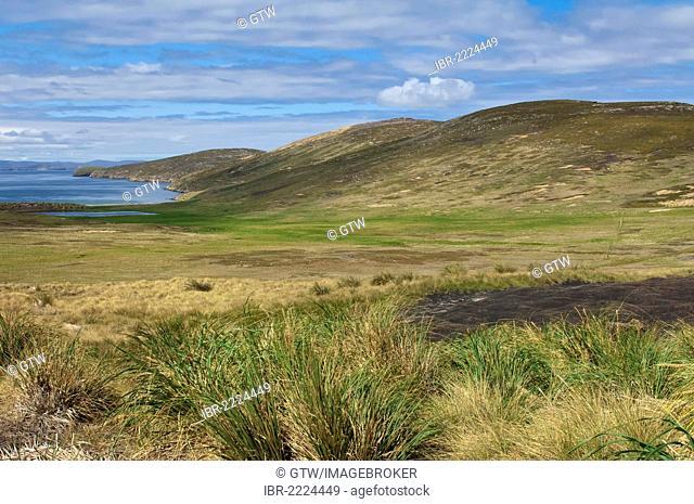 New Island coastline, Malvinas, Falkland Islands, South America