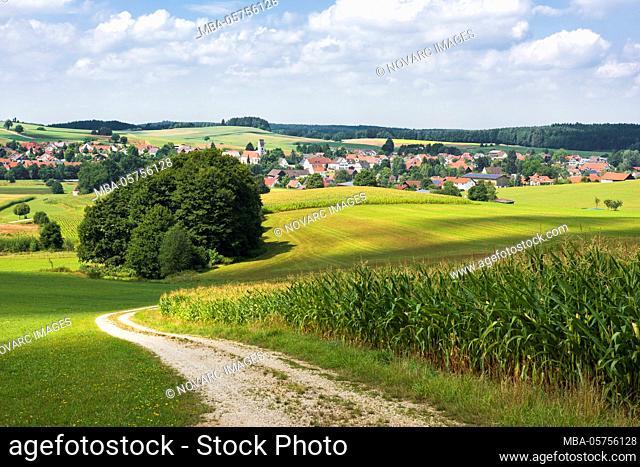 Mittelneufnach, Augsburg Nature Park Western Forests, Swabia, Bavaria, Germany, Europe
