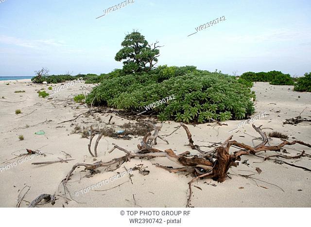 zhongjian island white sand