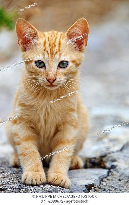 Greece, Ionian island, Corfu island, street cat