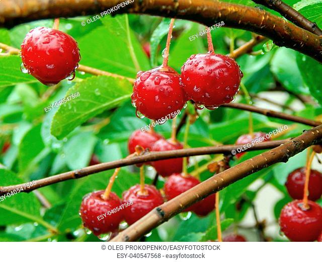 Summer harvest of fruits and berries in the garden of the garden