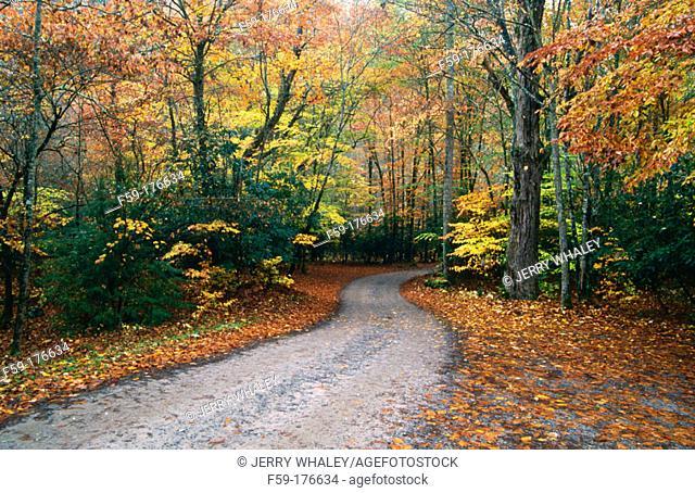 Autumn Road, Cataloochee Cove. Great Smoky Mountains NP. North Carolina. USA