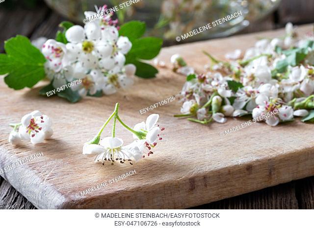 Fresh hawthorn flowers on a table