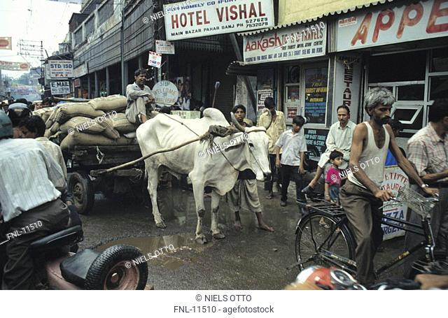 Pedestrians and ox cart on road, New Delhi, India