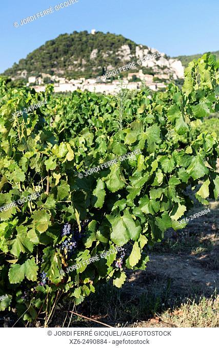 Vineyards in the wine producing region Côtes du Rhône Villages AOC, Séguret, Vaucluse, 84, Provence-Alpes-Côte d'Azur, France, Europe