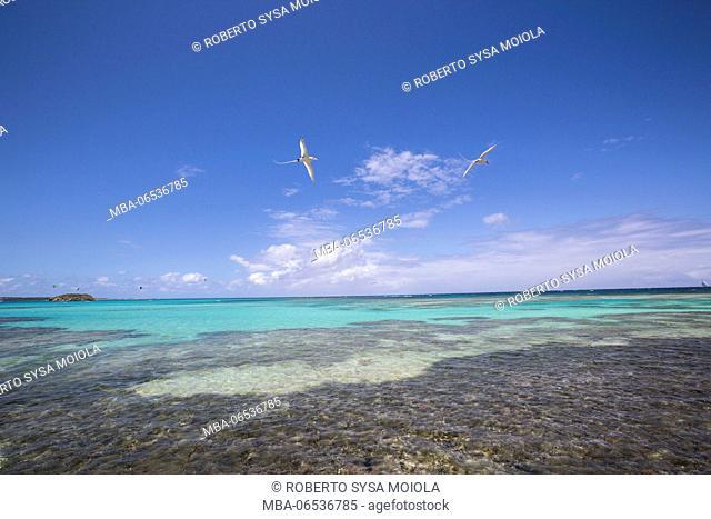 Birds fly on the turquoise waters of the Caribbean Sea Green Island Antigua and Barbuda Leeward Island West Indies