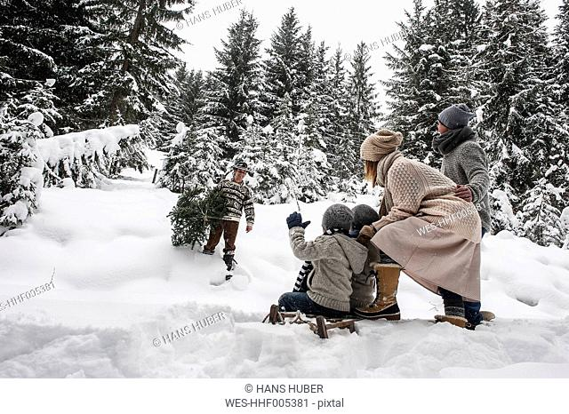 Austria, Altenmarkt-Zauchensee, man with Christmas tree and family together in winter forest