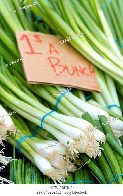 Small bundles of fresh green onions on display at local farmers market