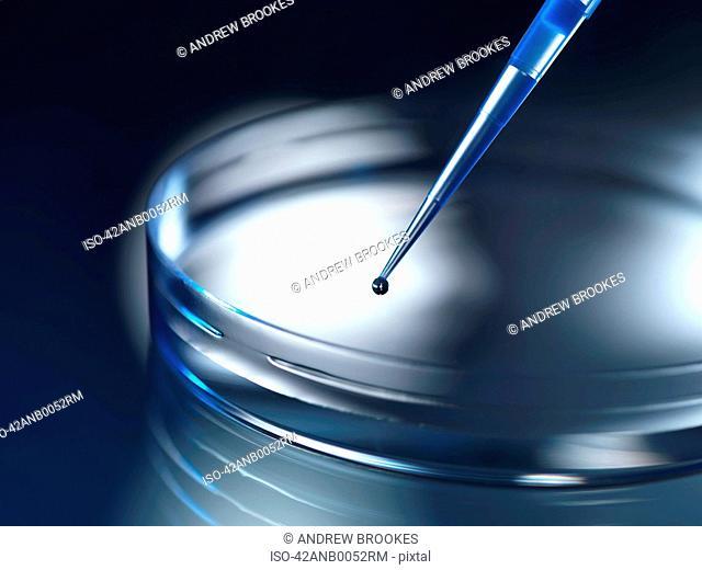 Close up of dropper in petri dish