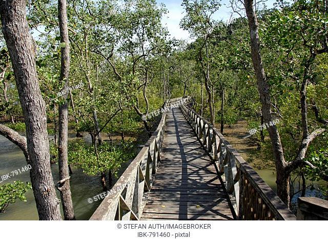 Wooden walkway through mangrove forest, Bako National Park, Sarawak, Borneo, Malaysia, Southeast Asia